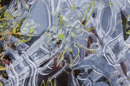 Green grass frozen in ice, winter abstract background, texture of ice Standard-Bild
