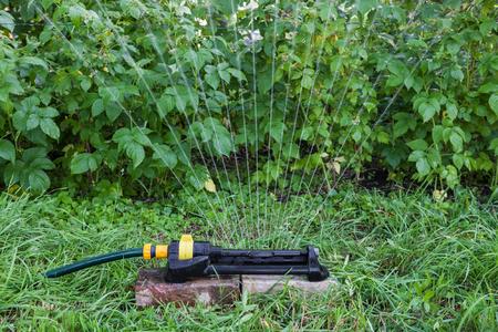 Sprinkler in the garden watering raspberry bushes