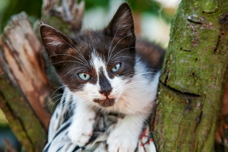 Young domestic kitten sitting on tree close-up