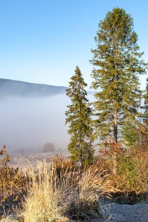 Foggy morning in the mountains, Ukraine, Carpathian Mountains, pine trees in the foreground Фото со стока