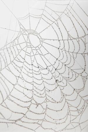 Frozen cobweb covered with hoarfrost closeup monochrome