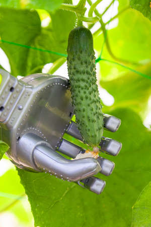 Smart robot farmer harvesting cucumbers in greenhouse, agriculture futuristic concept, android robot arm close up