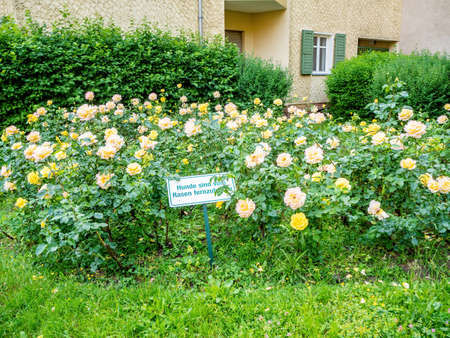 A sign prohibiting walking dogs on the lawn with rose bushes in the city of Berlin, Germany Foto de archivo