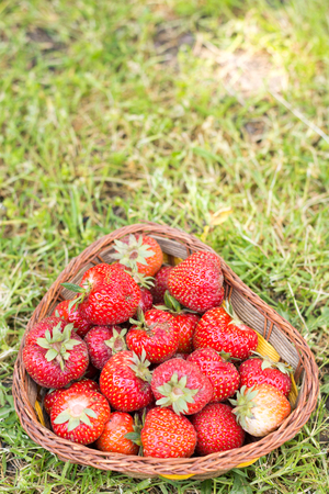 Basket full of fresh strawberries on the grass background. Just Stock Photo