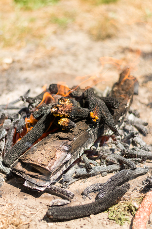 Burning fire from wood on the ground. Stock Photo