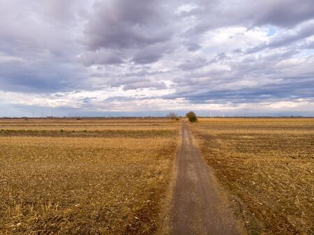 Agriculture concept with paved road in the corn fields with amazing cloudy blue sky 스톡 콘텐츠