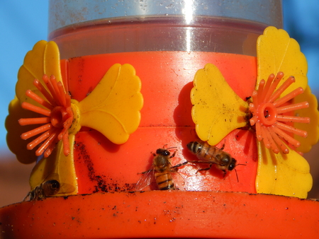 together produce more honey bees Imagens