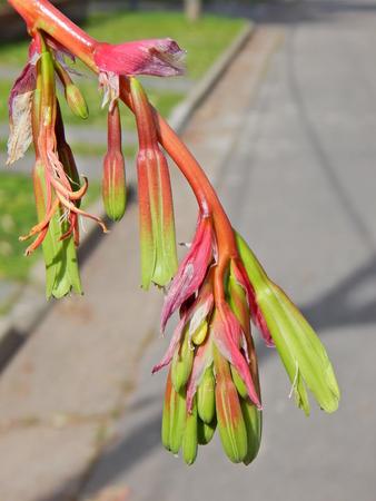 strange striking plant Imagens