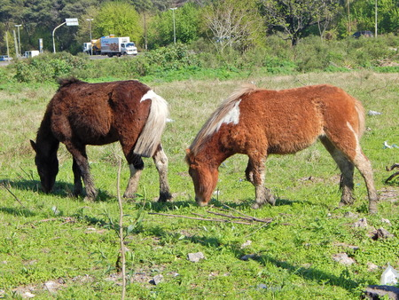 beautiful little horses
