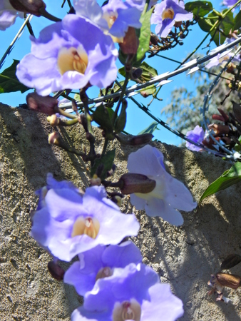 beautiful flowers in white and blue