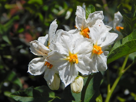 beautiful white flowers with yellow center
