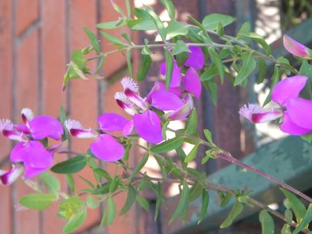 Beautiful white and purple flowers Imagens