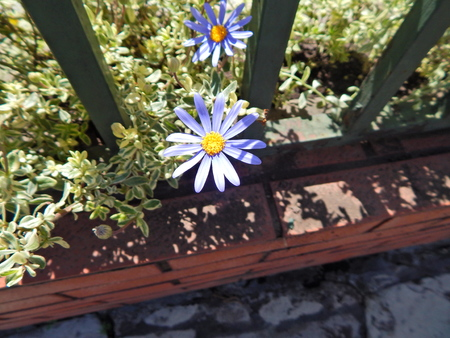 beautiful blue flowers with yellow center