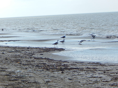families in the sea gulls