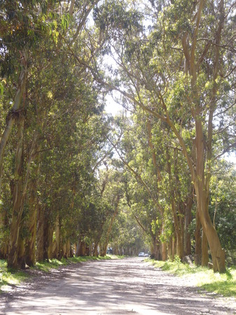path lined by trees Imagens