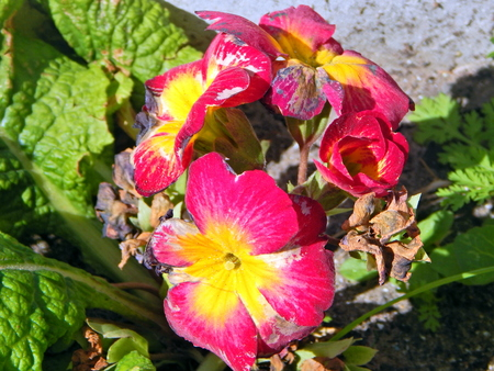 beautiful red and yellow flowers Imagens
