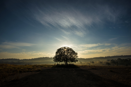 Big trees, meadow in the morning, and beautiful sky. Stok Fotoğraf - 111359146