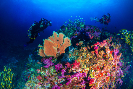 A photographer enjoyed diving in the blue world with colorful coral reefs and variety of fish. Stok Fotoğraf - 111359188
