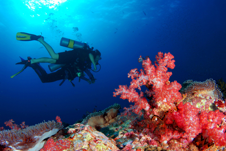 Underwater world, beautiful coral is a diver's paradise.