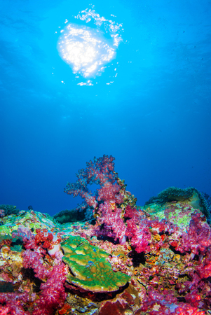 Under the sea with beautiful corals.