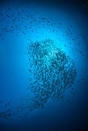 Fish herd Under the blue sea. Standard-Bild
