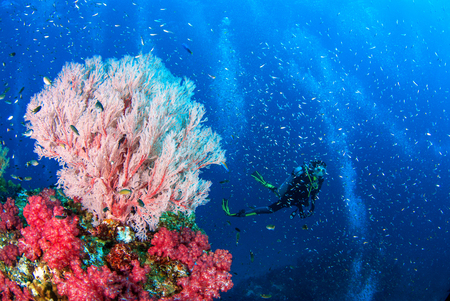 Wonderful underwater world with seafan and vibrant colors of corals and Scuba Diver backdrop, Scubadiving Underwater seascape concept. Stok Fotoğraf - 111359214