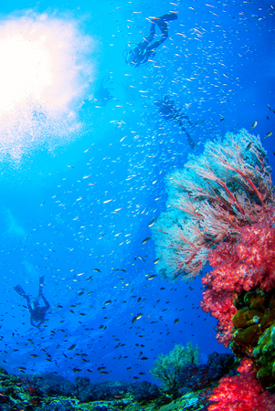 Wonderful underwater world with seafan and vibrant colors of corals and Scuba Diver backdrop, Scubadiving Underwater seascape concept. Stok Fotoğraf - 111359215