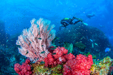 Wonderful underwater world with seafan and vibrant colors of corals and Scuba Diver backdrop, Scubadiving Underwater seascape concept. Stok Fotoğraf - 111359240
