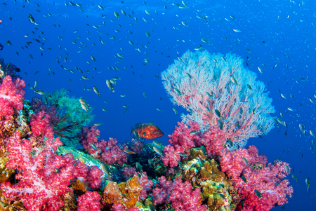 Wonderful underwater world with seafan and vibrant colors of corals and fish, Scubadiving Underwater seascape, concept.