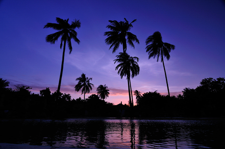 Black silhouette of beautiful twilight coconut trees.