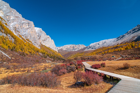 Autumn scenery in Yading Nature Reserve, Daocheng county, Ganzi Tibetan Autonomous Prefecture, Sichuan province of China. Stok Fotoğraf