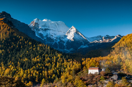 Autumn scenery in Yading Nature Reserve, Daocheng county, Ganzi Tibetan Autonomous Prefecture, Sichuan province of China. The holy peak Xiannairi Peak (Chenresiq) can been seen in the background. Stok Fotoğraf - 111359309