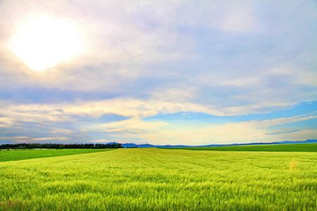 Strong perspective over a wide yellow-Green field with blue mountains and colorfull sky.  photo