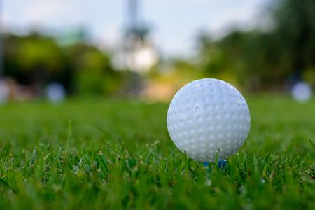 pelota de golf: Pelota de golf sobre tee  Foto de archivo