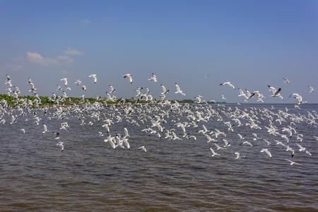 flock: Flock of seagull Stock Photo