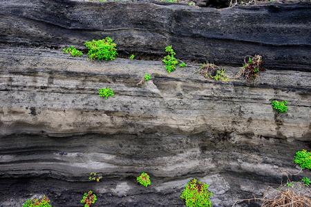 Volcanic deposits. south korea, jeju island Фото со стока