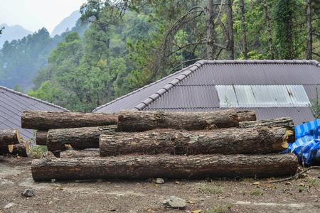 wood cut: Cut logs, wood prepatation