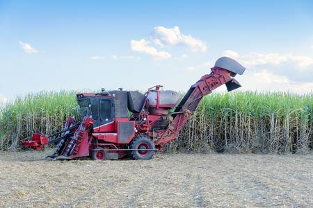 de suikerrietoogstmachine op suikerrietgebied Stockfoto