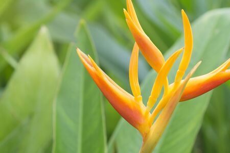 san diego: bird of paradise withe the leaf at background
