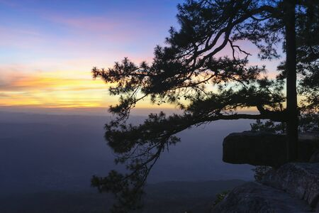 The silhouette scene of pine tree at the Lonsak cliff in the Phukradung nation park after the sunset with the twilight scene Stock Photo
