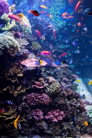 pez payaso: Acuario de agua salada con peces tropicales