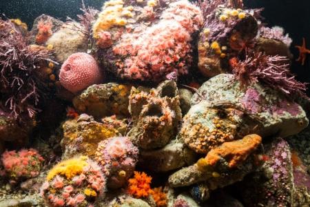 Saltwater Anemone Coral Reef Tank photo