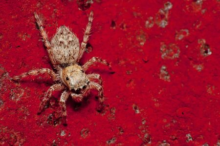 spider on red floor photo