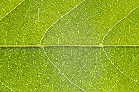 The leaf close up  Abstract background  photo