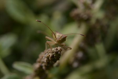 beetle on a leaf.