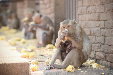 Mother Monkey and cute baby monkey In Lopburi Thailand.