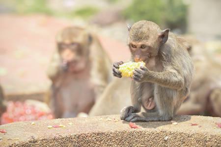 Cute kid monkey group In Lopburi Thailand. Stock Photo