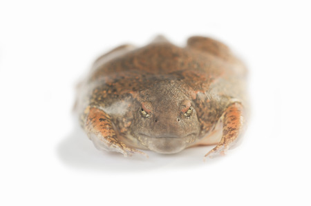 Frog funny faces(Face upset, bad mood) on a white background. Stockfoto