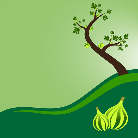 fig tree with leaves and fruits, Vector illustration. Illustration