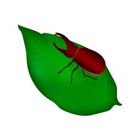 Beetles in nature ,Rhino beetle ,Dynastinae